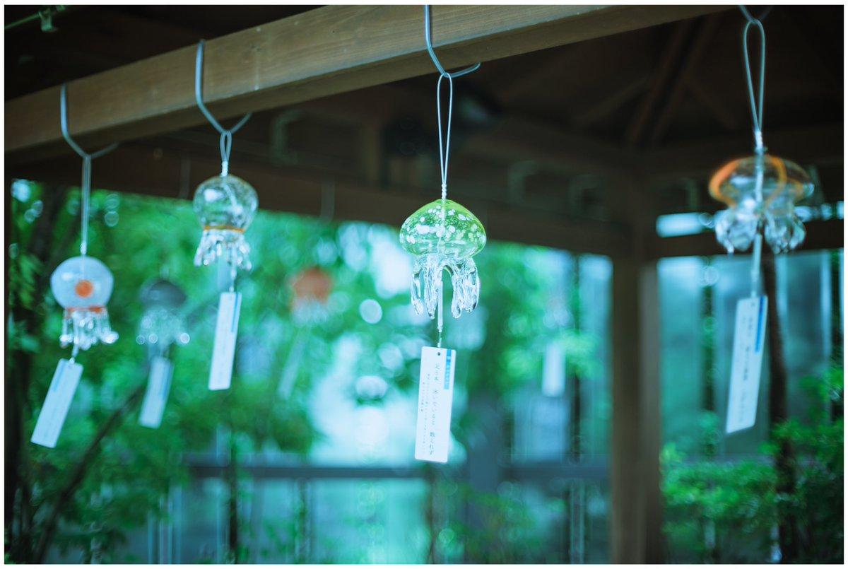 กระดิ่งลมแมงกะพรุนได้แรงบันดาลใจมากจากโซน Jellyfish Wonder ภายใน พิพิธภัณฑ์สัตว์น้ำเกียวโต