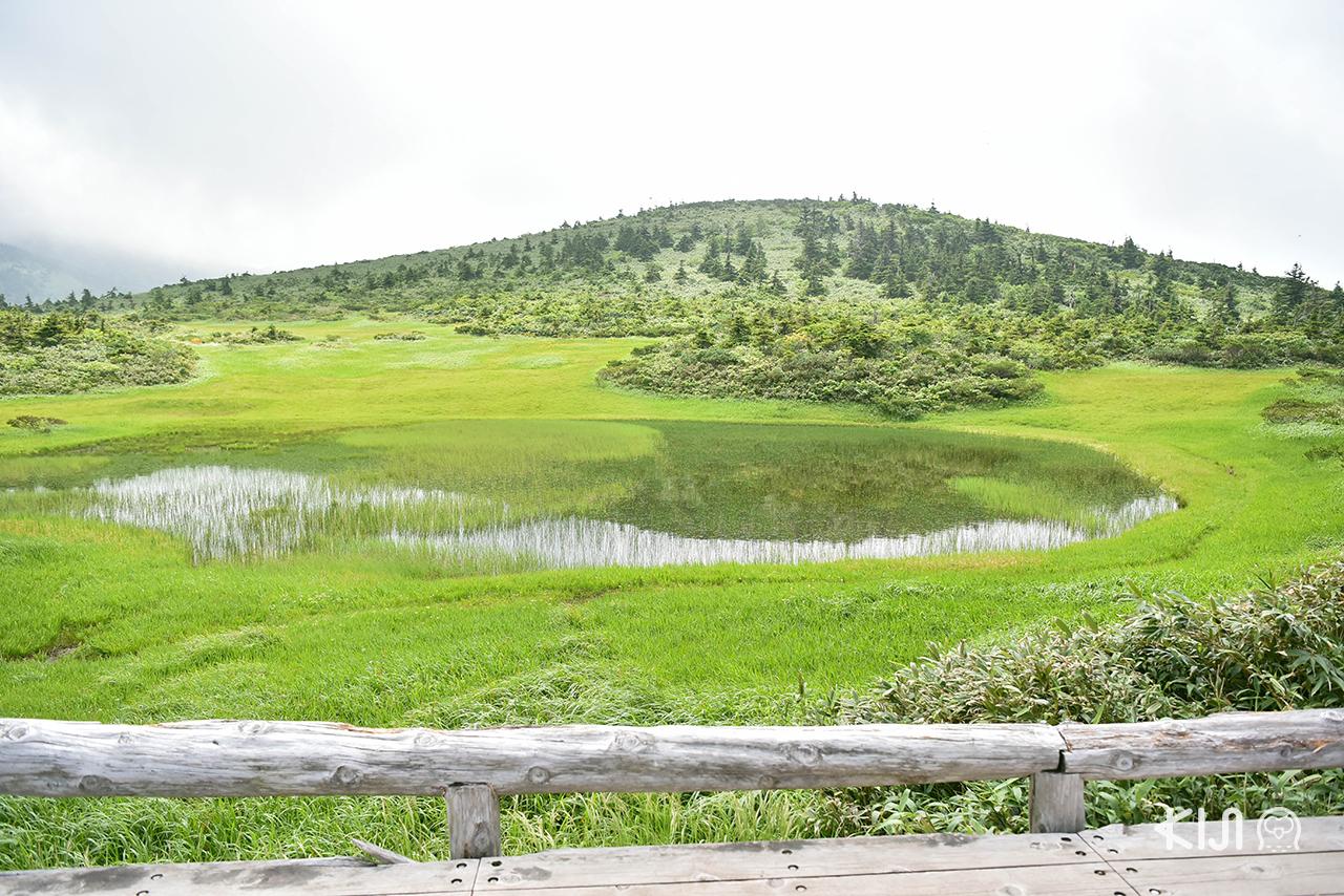 อาโอโมริ - อิวาเตะ ซัมเมอร์ทริป 5 วัน : Tamoyachi ที่ลุ่มน้ำบนภูเขาฮักโกดะ