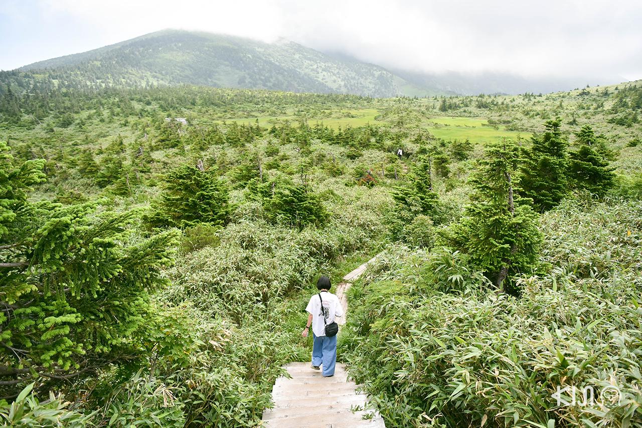 ทริป อาโอโมริ - อิวาเตะ : ฤดูร้อนบนภูเขาฮักโกดะ (Mt. Hakkoda)