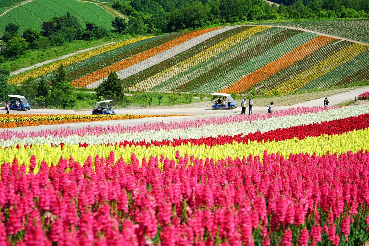 Biei : สวนดอกไม้ชิกิไซโนะโอกะ เมืองบิเอ