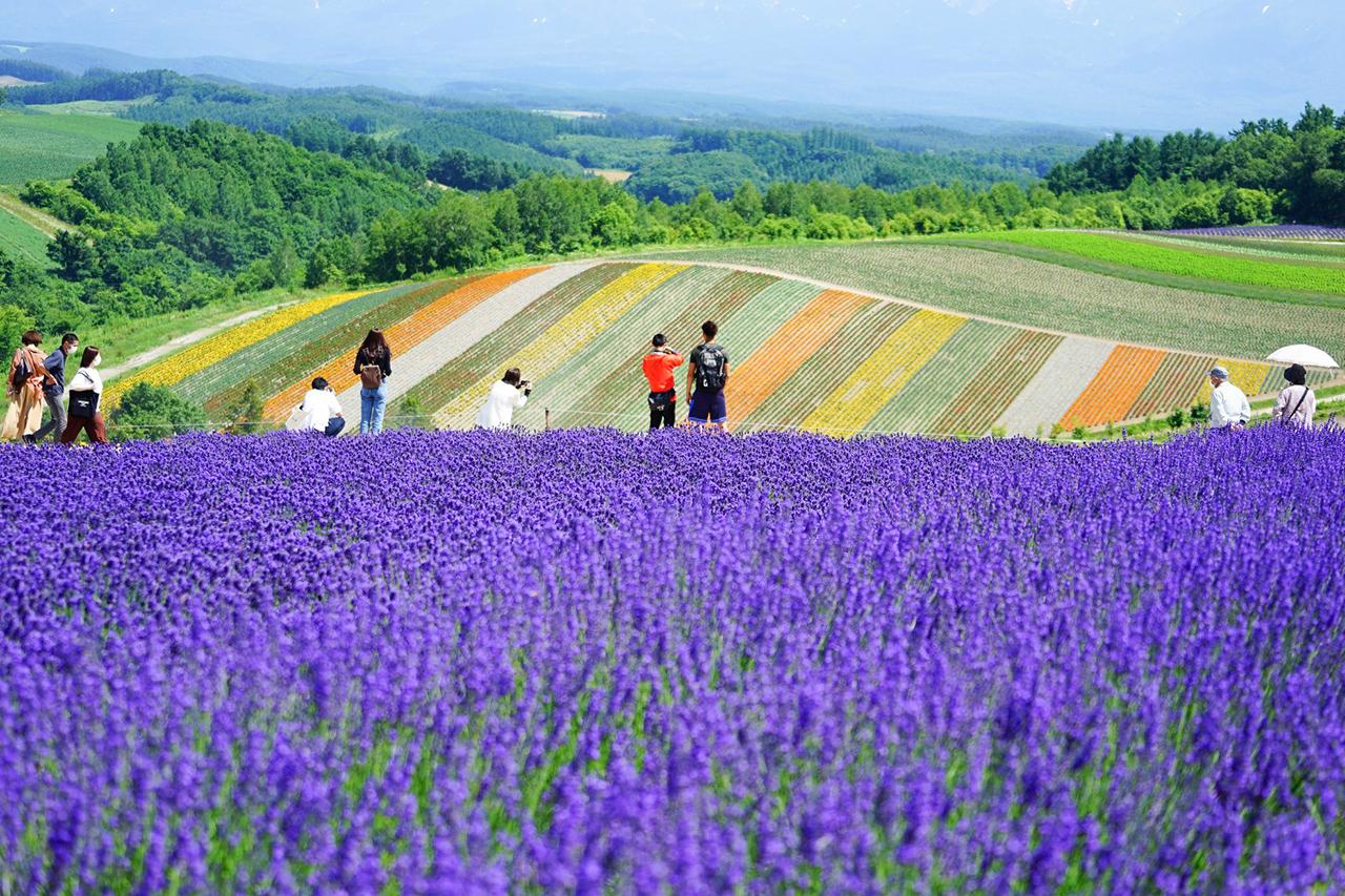 Biei : Shikisai-no-oka Flower Garden