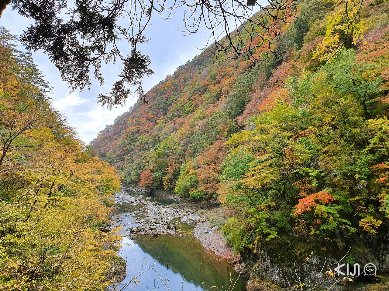 Dakigaeri Gorge หุบเขาที่เป็นจุดชมใบไม้เปลี่ยนสีชื่อดังใน อาคิตะ