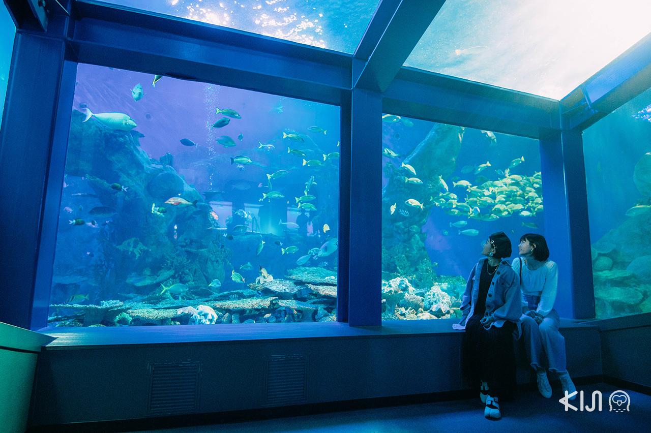 ภายใน พิพิธภัณฑ์สัตว์น้ำโทบะ Toba Aquarium มีสัตว์ให้ชมมากกว่า 1,200 สปีขีส์