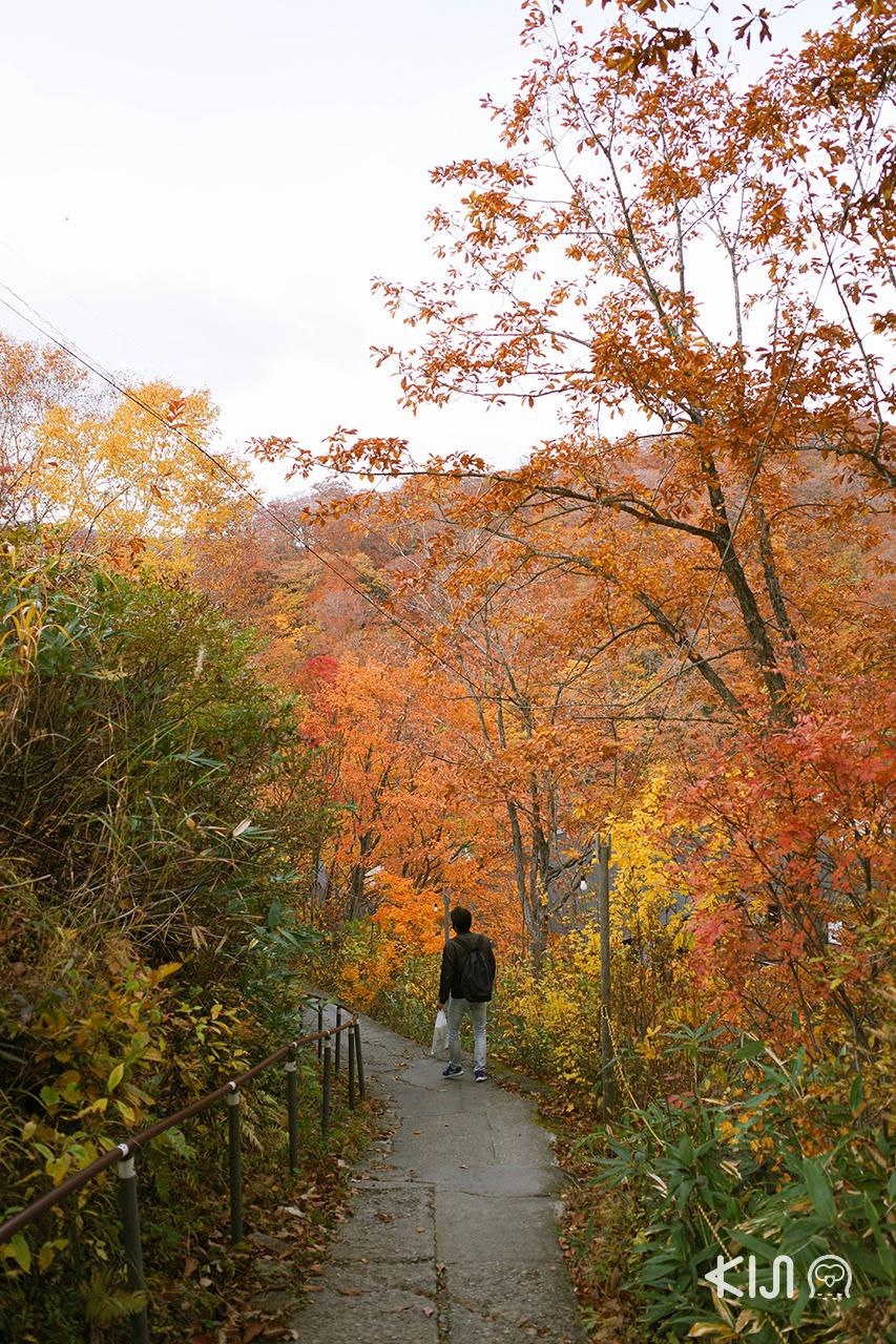 ทางเดินไป Kuroyu Onsen นิวโตออนเซ็น อาคิตะ