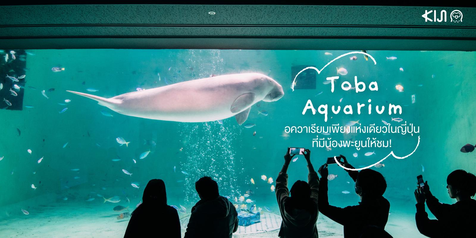 Toba Aquarium อควาเรียมเพียงแห่งเดียวในญี่ปุ่น ที่มีพะยูนให้ชม