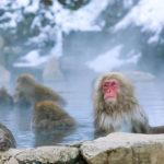 Jigokudani-Monkey-Park_l