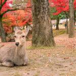 Nara-Park_m